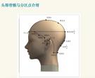 头部骨骼与分区点的位置介绍